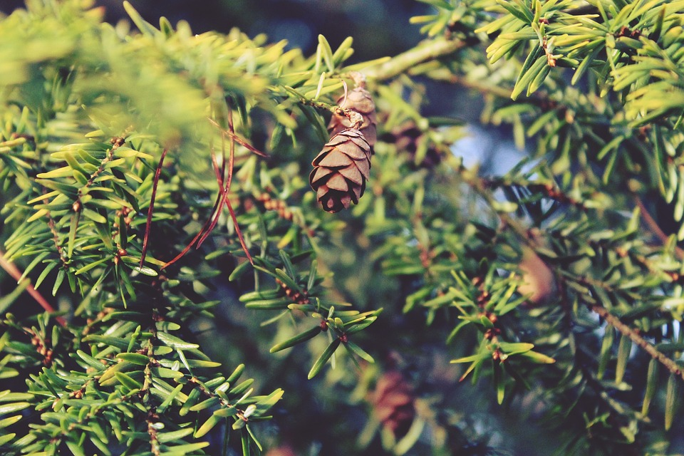 branches-1109967_960_720
